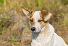 Portret van aanbiddelijke gemengde rassen verdwaalde hond Stock Foto