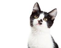 Portret van Aanbiddelijke Kitten Tilting Head Royalty-vrije Stock Foto's