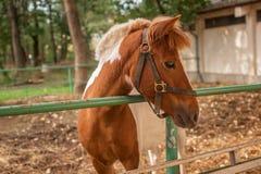 Portret van aardig bruin paard Royalty-vrije Stock Fotografie