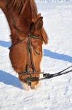 Portret van aardig paard Royalty-vrije Stock Afbeeldingen
