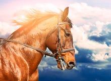 Portret van baaipaard op de looppas op de achtergrond van de bewolkte hemel Royalty-vrije Stock Afbeelding