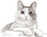 Portret van binnenlandse kat Royalty-vrije Stock Fotografie