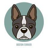 Portret van Boston Terrier Vector illustratie Royalty-vrije Stock Fotografie