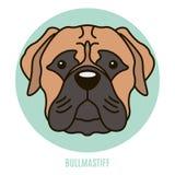Portret van Bullmastiff Vector illustratie Stock Fotografie