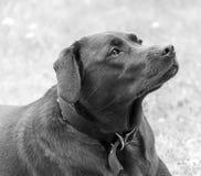 Portret van Coco royalty-vrije stock foto