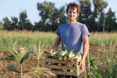 Portret van de doos van de landbouwersholding met graan op het gebied en het bekijken camera Royalty-vrije Stock Foto