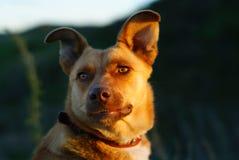 Portret van de hond stock fotografie