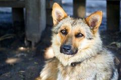 Portret van de hond royalty-vrije stock afbeelding