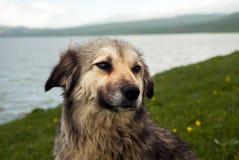 Portret van de hond royalty-vrije stock foto's
