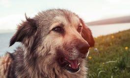 Portret van de hond stock foto's