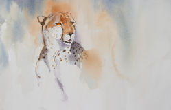 Portret van de jachtluipaard (geppard) Royalty-vrije Stock Foto