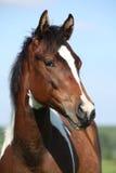Portret van de mooie jonge merrie van het verfpaard stock foto's