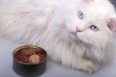 Portret van de oude kat. Stock Fotografie