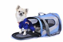 Portret van de Oxie het Wachtende Hond Royalty-vrije Stock Fotografie