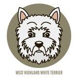 Portret van de Witte terriër van het het Westenhoogland Royalty-vrije Stock Afbeeldingen