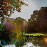Portret van de zon in park Stock Afbeeldingen