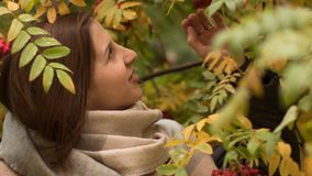 Portret van een aantrekkelijke Kaukasische vrouw die tegen een achtergrond van de herfstgebladerte glimlachen Stock Foto