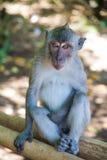 Portret van een aap Royalty-vrije Stock Fotografie