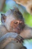 Portret van een aap Stock Foto's