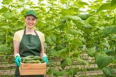 Portret van een arbeider met een krat van verse komkommers Stock Foto's
