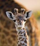 Portret van een babyGiraf kenia tanzania 5 maart 2009 Royalty-vrije Stock Afbeelding