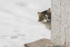 Portret van een binnenlandse kat Royalty-vrije Stock Afbeelding