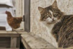 Portret van een binnenlandse kat Stock Fotografie