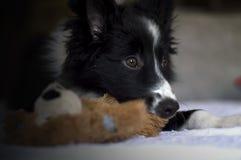 Portret van een border collie-puppy op sofà Stock Foto
