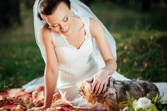 Portret van een bruid met een hond Royalty-vrije Stock Afbeelding