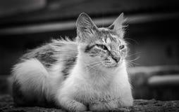 Portret van een bruine kat van gestreepte kat binnenlandse shorthair stock foto's