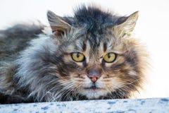 Portret van een close-up van een pluizige kat op een witte background_ stock foto's