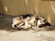Portret van een droevige Bastaarde hond stock afbeelding