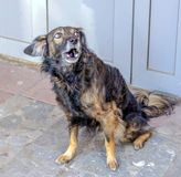 Portret van een Droevige Dakloze Hond stock fotografie