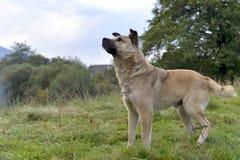 Portret van een eenzame dakloze hond stock foto