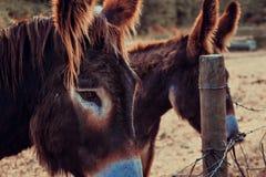 Portret van een ezel stock foto's