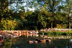 Portret van een flamingo Royalty-vrije Stock Fotografie