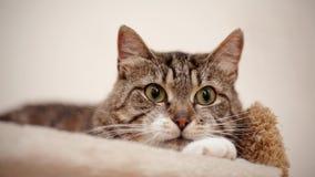 Portret van een grijze gestreepte kat met groene ogen Stock Fotografie