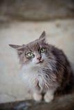 Portret van een grijze kat met grote groene ogen stock foto's