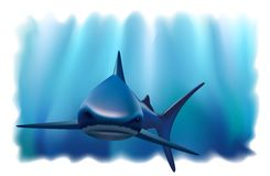 Portret van een haai in de oceaan. Stock Fotografie