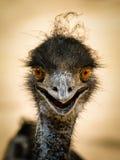 Portret van een het glimlachen struisvogel Royalty-vrije Stock Afbeeldingen