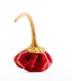 Portret van een Hete Spaanse peper Stock Foto's