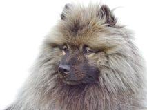 Portret van een hond Stock Afbeelding