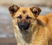 Portret van een hond in de middag stock foto