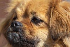 Portret van een hond in de middag royalty-vrije stock afbeeldingen