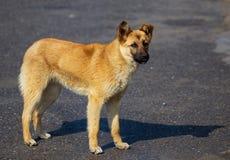 Portret van een hond in de middag stock foto's