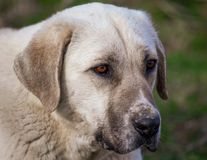Portret van een hond in de middag stock fotografie