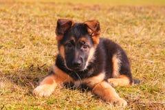 Portret van een hond die op het gras legt stock afbeelding