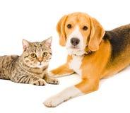 Portret van een hond en een kat Stock Afbeeldingen