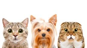 Portret van een hond en twee katten stock afbeeldingen