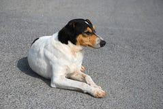 Portret van een hond op de straat Royalty-vrije Stock Afbeeldingen